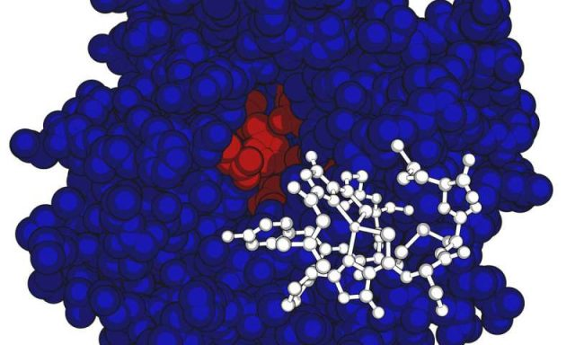 Bacteria eats greenhouse gas with a side of protein