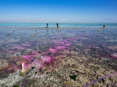 Coral reef experiment shows Acidification from carbon dioxide slows growth