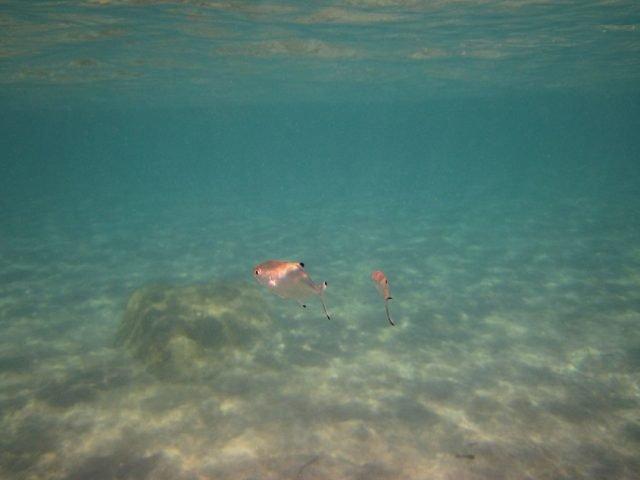 Decreased oxygen levels could present hidden threat to marine species
