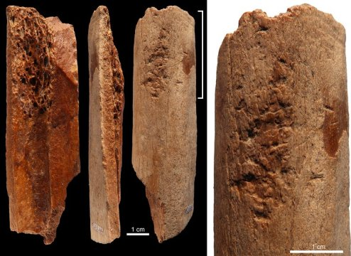 Discovery of sophisticated 115000 year old bone tools in China