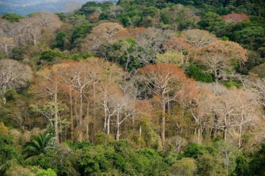 Diverse tropical forests grow fast despite widespread phosphorus limitation