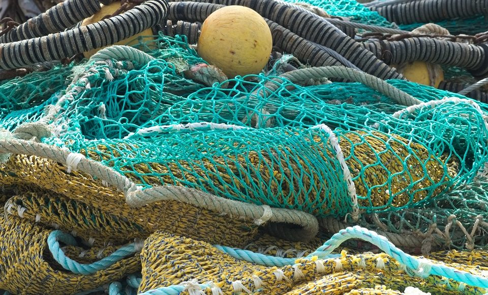 Ending overfishing would stop the population declines of endangered bycatch species about half the time