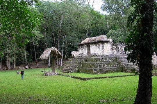 First evidence of live traded dogs for Maya ceremonies