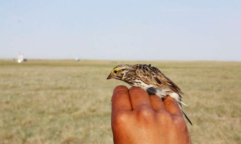 Landmark study reports on new layer of complexity in songbird communication
