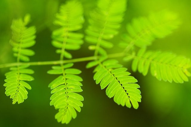 Study uncovers first steps of photosynthesis