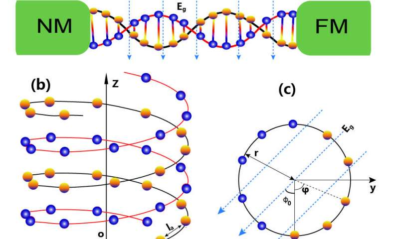 Thermally driven spin current in DNA