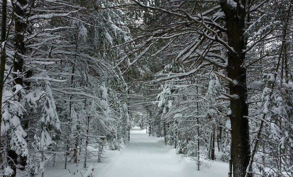 Warm Arctic means colder snowier winters in northeastern US