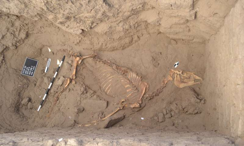 Archaeologists on ancient horse find in Nile River Valley