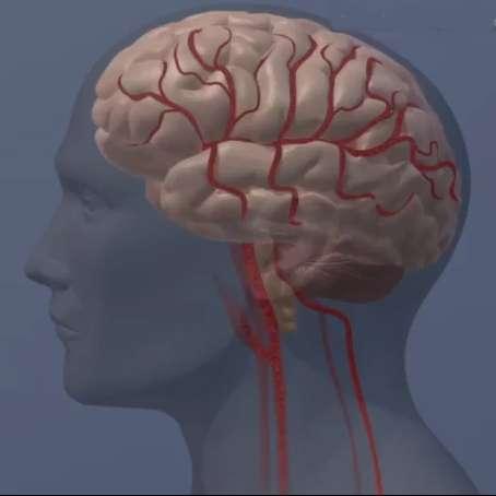 Calcium based MRI sensor enables more sensitive brain imaging