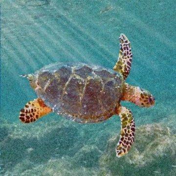 New ancestor of modern sea turtles found in Alabama