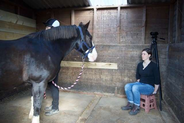 Study finds horses remember facial expressions of people theyve seen before