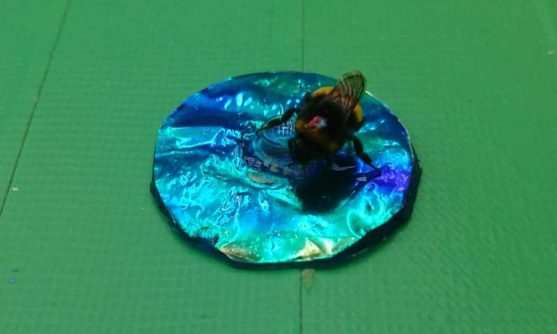 Bumblebees confused by iridescent colors
