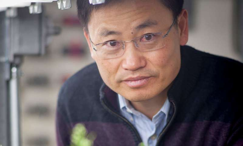CRISPR edited rice plants produce major boost in grain yield