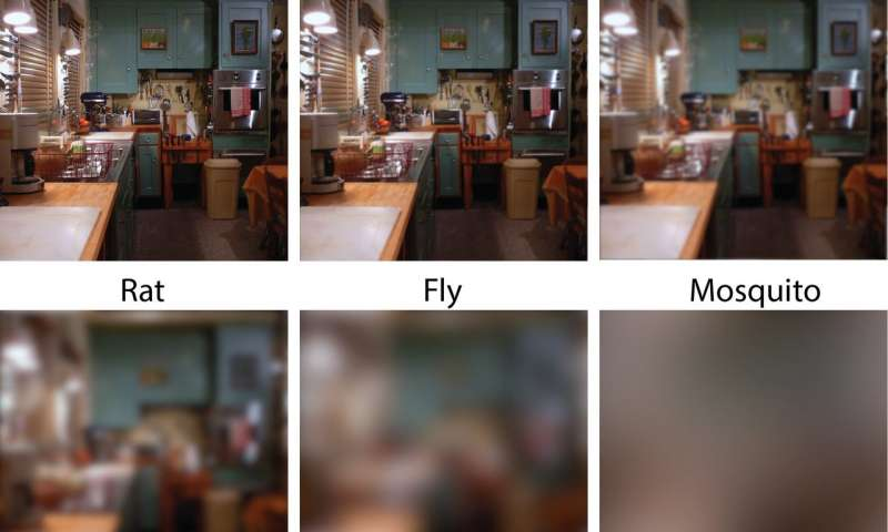 Details that look sharp to people may be blurry to their pets