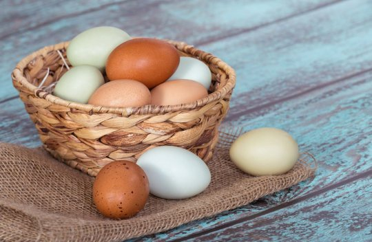 Eggs not linked to cardiovascular risk despite conflicting advice
