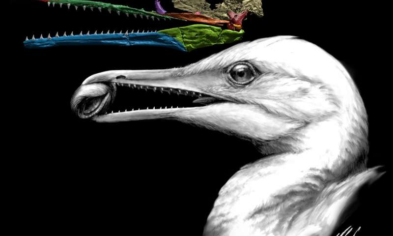 Scientists find the first bird beak right under their noses