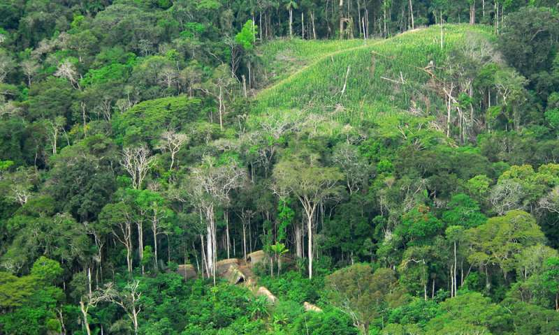 Study finds Amazonian rainforests gave birth to the worlds most diverse tropical region
