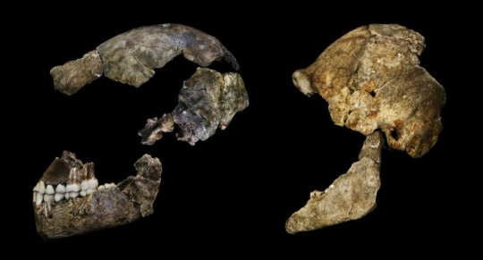 Where hominid brains are concerned size doesnt matter