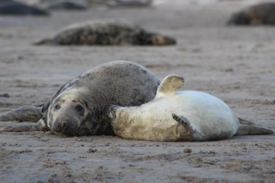Biologists show that female seals have consistent personalities