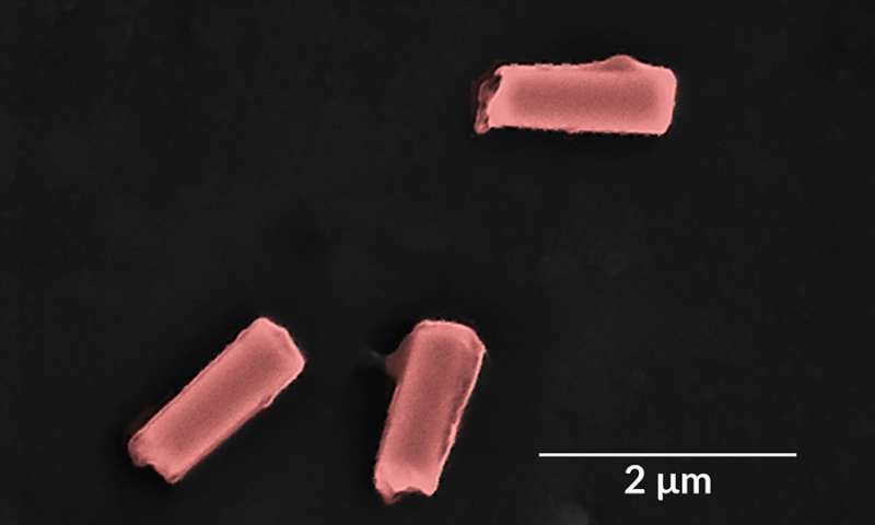 Cell like nanorobots clear bacteria and toxins from blood