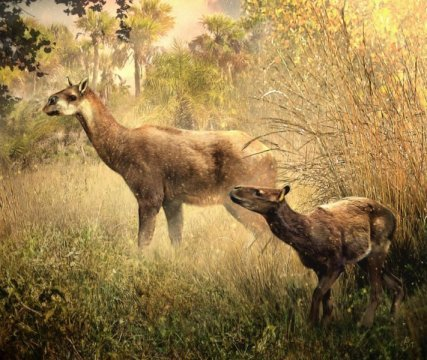 Paleontologists ID two new Miocene mammals in Bolivia