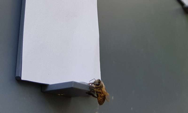 Scientists discover bees understand the concept of zero