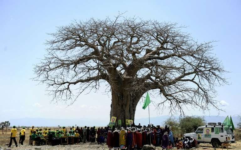 Shocking die off of Africas oldest baobabs study