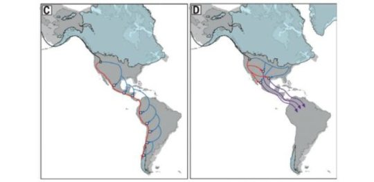 Two ancient populations that diverged later reconverged in the Americas