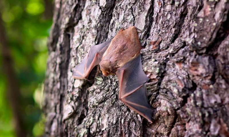 Bats harbor a gene swiped from an ancient Ebola like virus—heres how they may use it