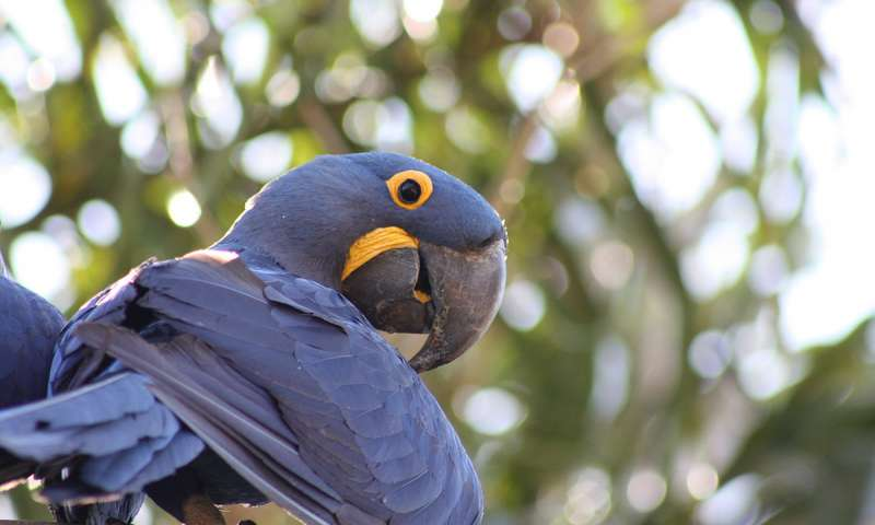 Neuroscientists uncover secret to intelligence in parrots