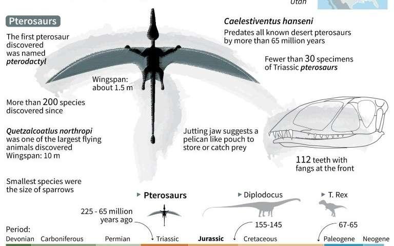 200 million year old Pterosaur built for flying