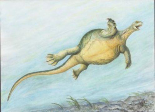 Fossil turtle didnt have a shell yet but had the first toothless turtle beak
