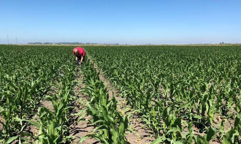Improving soil quality can slow global warming