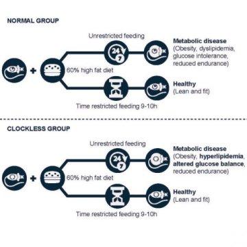Eating in 10 hour window can override disease causing genetic defects nurture health