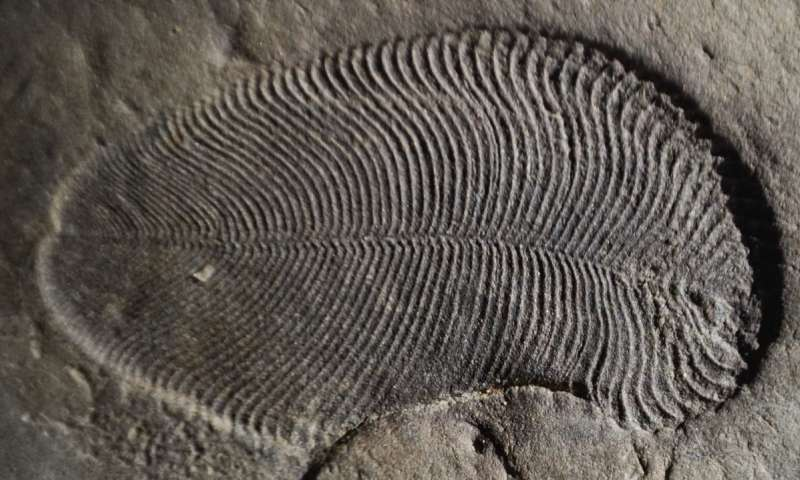 Fat from 558 million years ago reveals earliest known animal