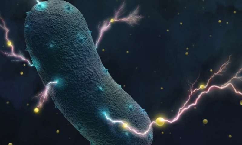 Hundreds of electricity generating bacteria found including pathogenic probiotic and fermenting bacteria