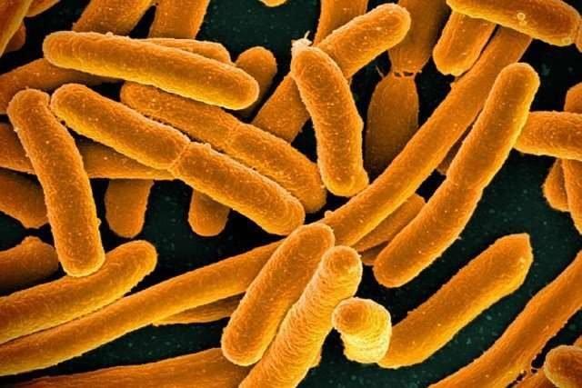 Microbial dark matter dominates Earths environments