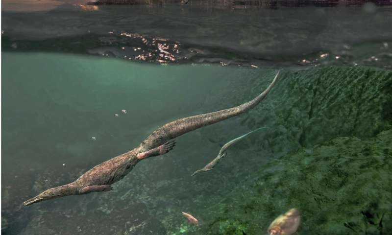 Oldest known aquatic reptiles probably spent time on land
