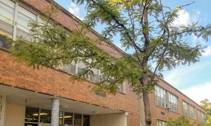 Schoolyard tree cover predicts math performance in high poverty urban schools