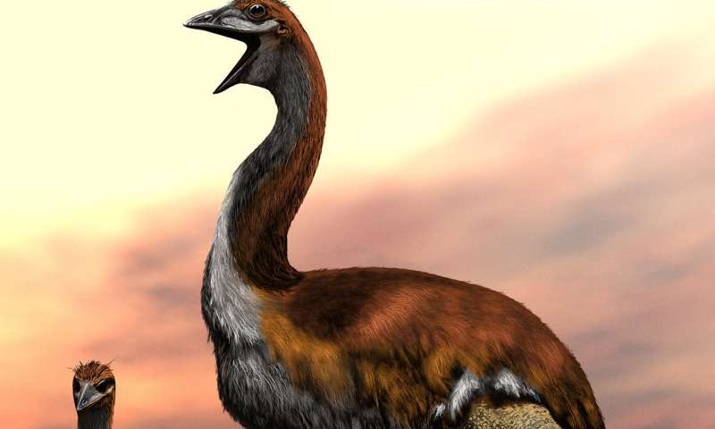 Team names worlds largest ever bird—Vorombe titan