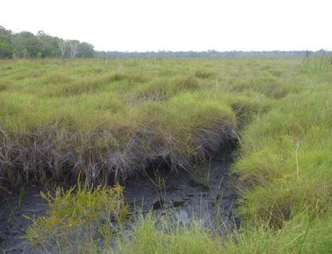 Warming Peatlands will store more carbon initially but that will change