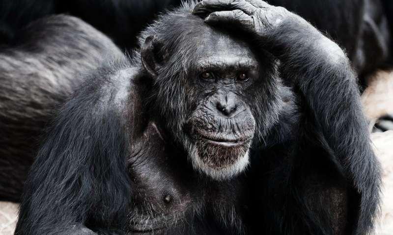 Affable apes live longer study shows