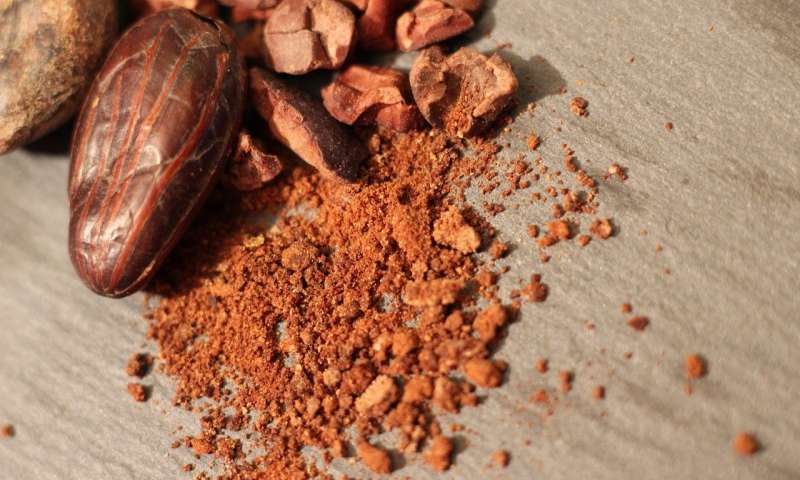 Cacao analysis dates the dawn of domesticated chocolate trees to 3600 years ago