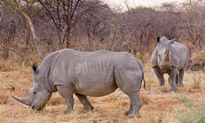 Mathematicians propose new hunting model to save rhinos and whales from extinction