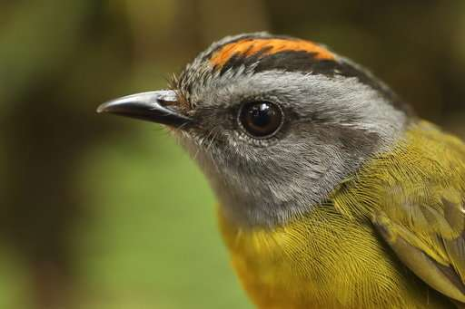 Mountain birds on escalator to extinction as planet warms