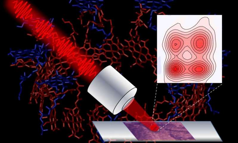 Researchers develop microscope to track light energy flow in photosynthetic cells