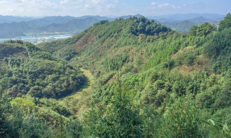 Species rich forests store twice as much carbon as monocultures