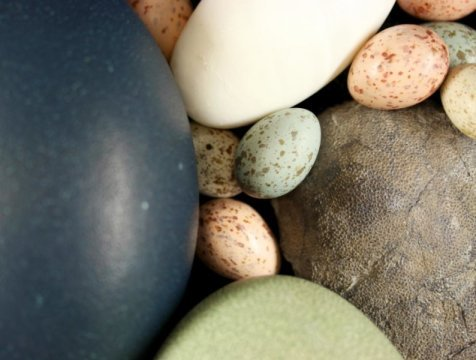 Dinosaurs put all colored birds eggs in one basket evolutionarily speaking