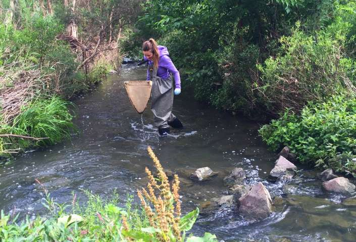 Drug pollution concentrates in stream bugs passes to predators in water and on land
