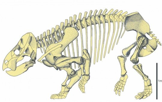 Gigantic mammal cousin discovered